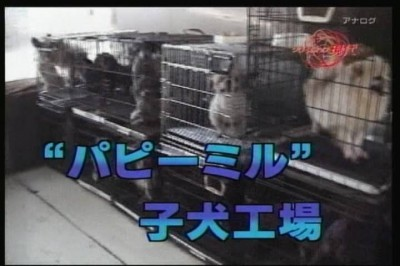 09年08月05日19時30分-NHK総合(名古屋)-[S]クローズアップ現代 旬なテーマから-0(1)
