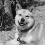 救出2年崖っぷち犬 : 徳島 : 地域 : YOMIURI ONLINE(読売新聞)