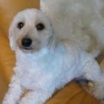 ガイドライン -子犬期