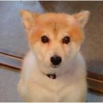 解決:転載:【緊急】 転載希望です。愛知県名古屋市で迷い犬を探しています。 – レイくん&シュウくんの日記 – Yahoo!ブログ