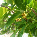 毛虫の季節